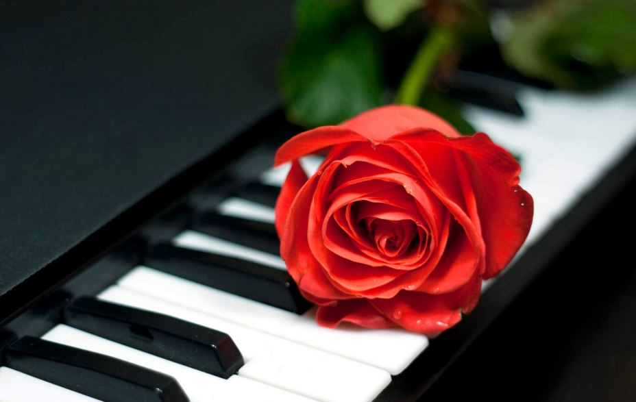 Frisco Piano rose